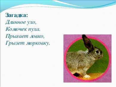 Загадка: Длинное ухо, Комочек пуха. Прыгает ловко, Грызет морковку.