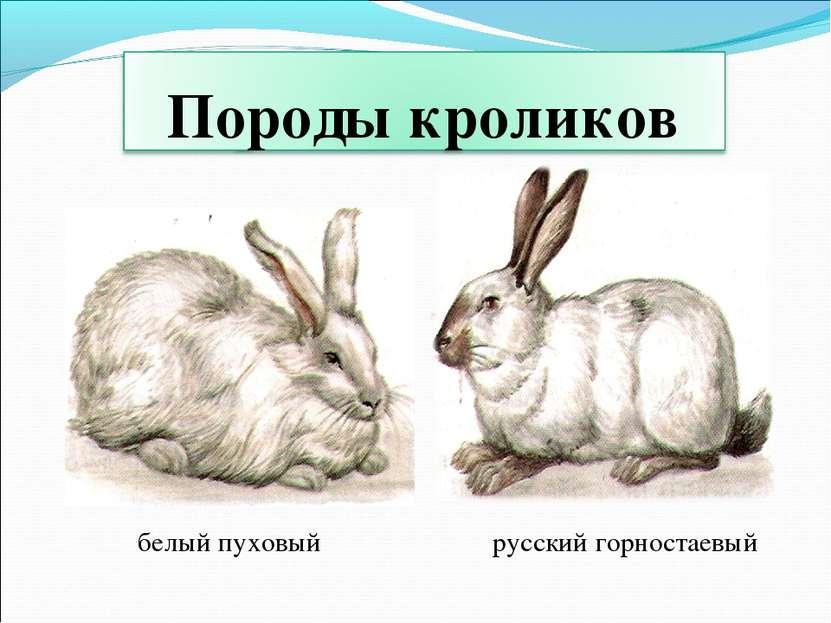 белый пуховый русский горностаевый