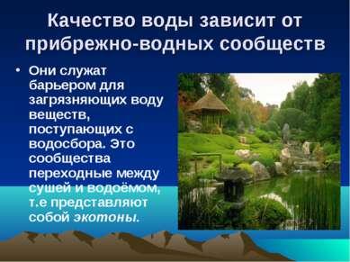 Качество воды зависит от прибрежно-водных сообществ Они служат барьером для з...