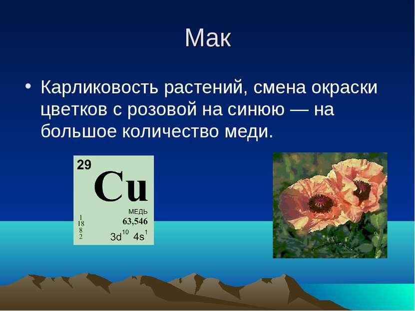Мак Карликовость растений, смена окраски цветков с розовой на синюю — на боль...