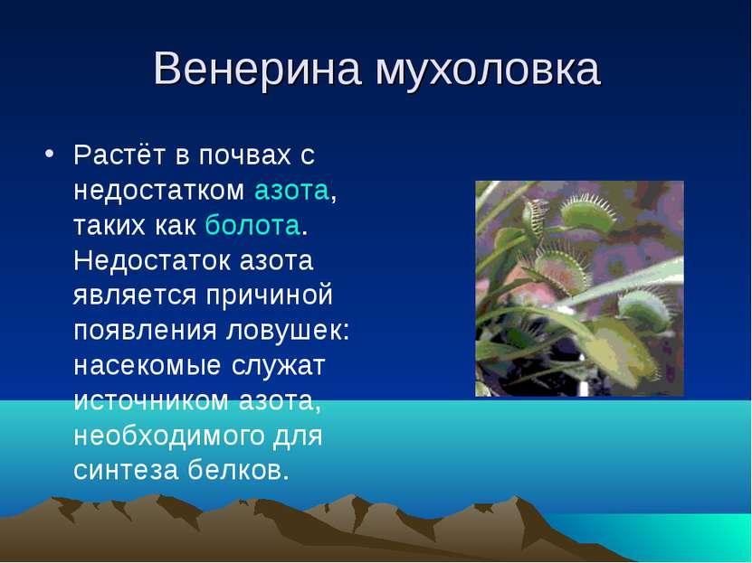 Венерина мухоловка Растёт в почвах с недостатком азота, таких как болота. Нед...