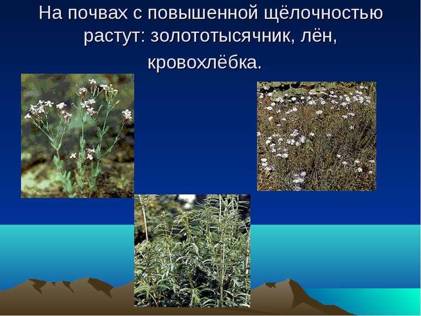 На почвах с повышенной щёлочностью растут: золототысячник, лён, кровохлёбка.