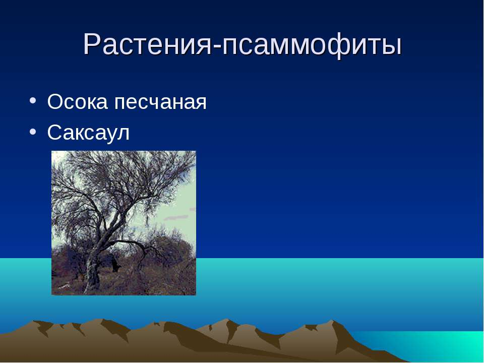 Растения-псаммофиты Осока песчаная Саксаул