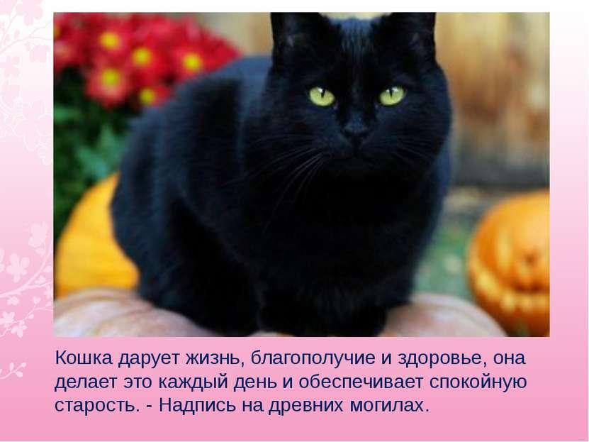 Кошка дарует жизнь, благополучие и здоровье, она делает это каждый день и обе...
