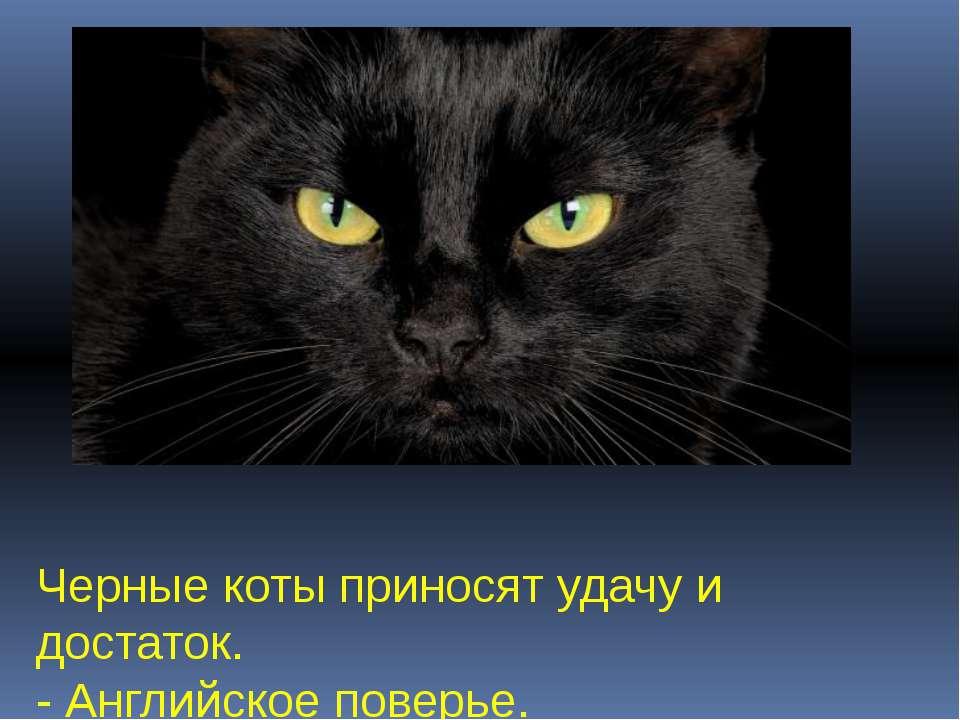 Черные коты приносят удачу и достаток. - Английское поверье.