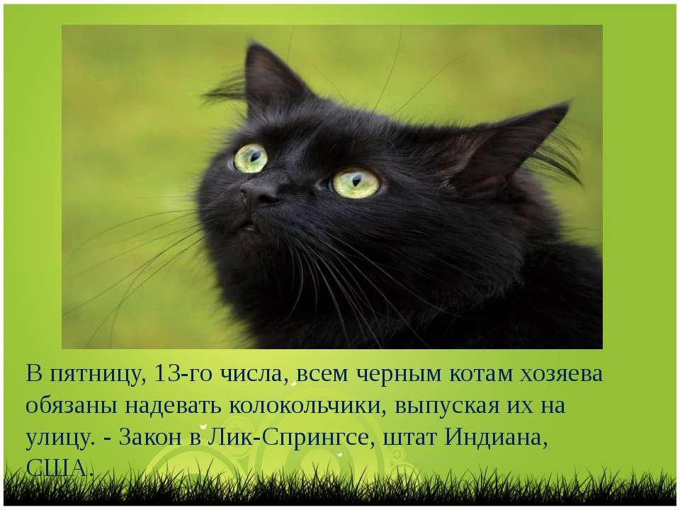 В пятницу, 13-го числа, всем черным котам хозяева обязаны надевать колокольчи...