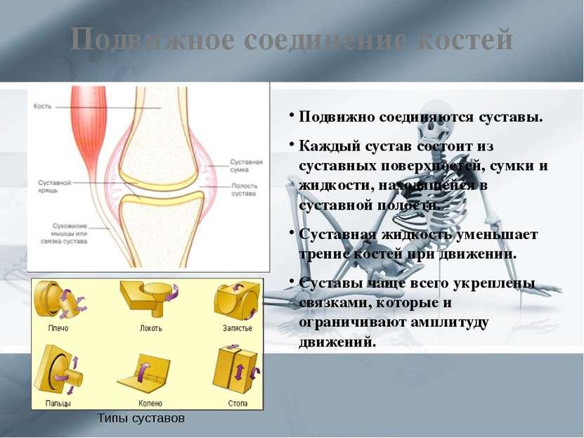 Подвижное соединение костей Подвижно соединяются суставы. Каждый сустав состо...