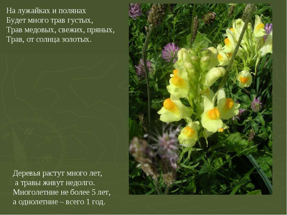 На лужайках и полянах Будет много трав густых, Трав медовых, свежих, пряных, ...