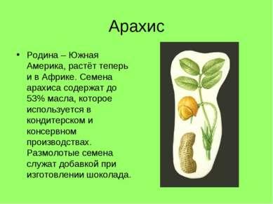 Арахис Родина – Южная Америка, растёт теперь и в Африке. Семена арахиса содер...