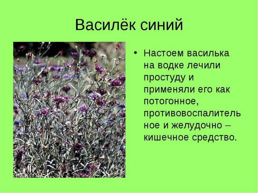 Василёк синий Настоем василька на водке лечили простуду и применяли его как п...