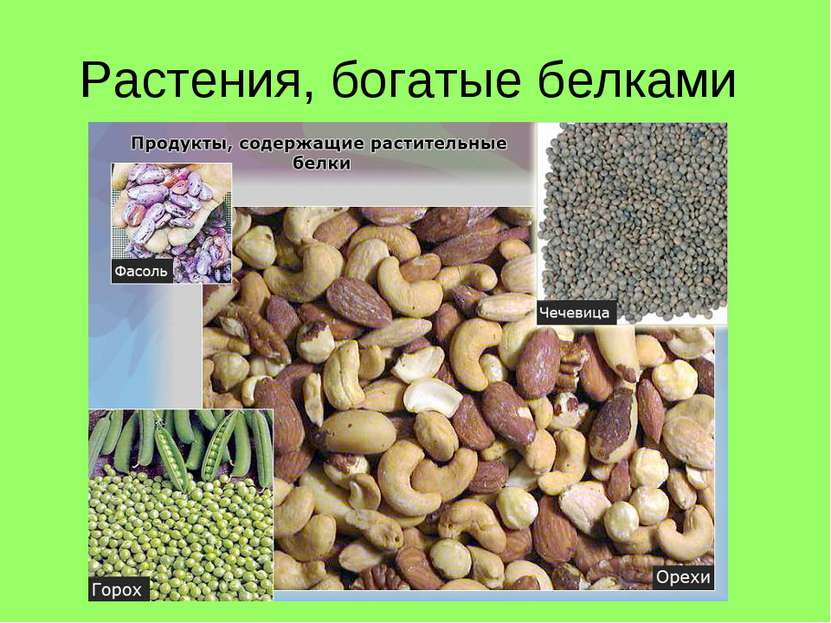 Растения, богатые белками