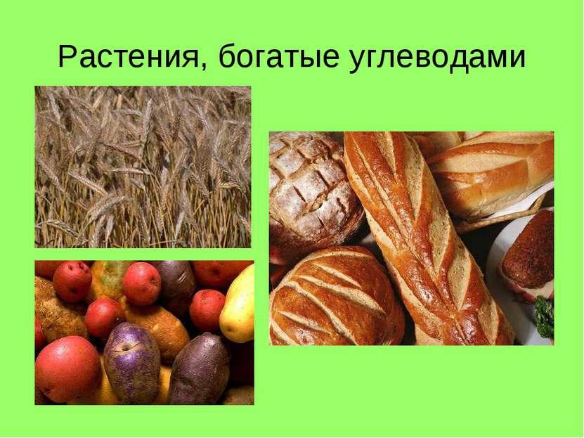 Растения, богатые углеводами