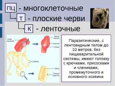 ПЦ - многоклеточные Т - плоские черви К - ленточные Паразитические, с лентови...