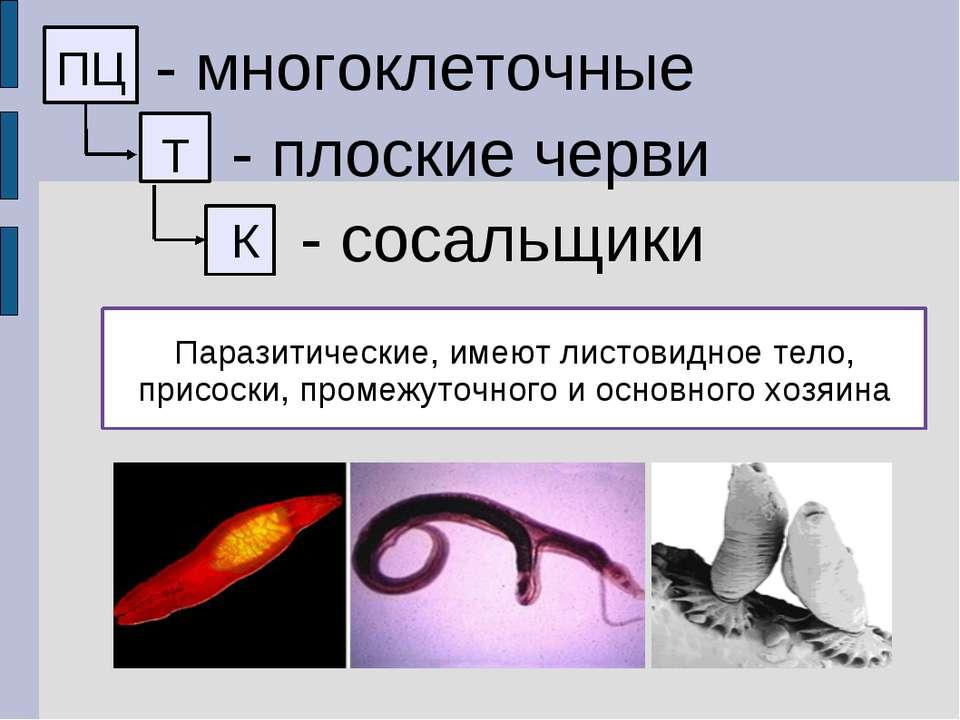 ПЦ - многоклеточные Т - плоские черви К - сосальщики Паразитические, имеют ли...