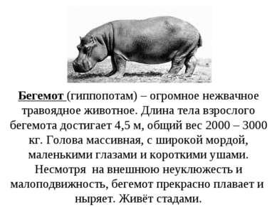 Бегемот (гиппопотам) – огромное нежвачное травоядное животное. Длина тела взр...