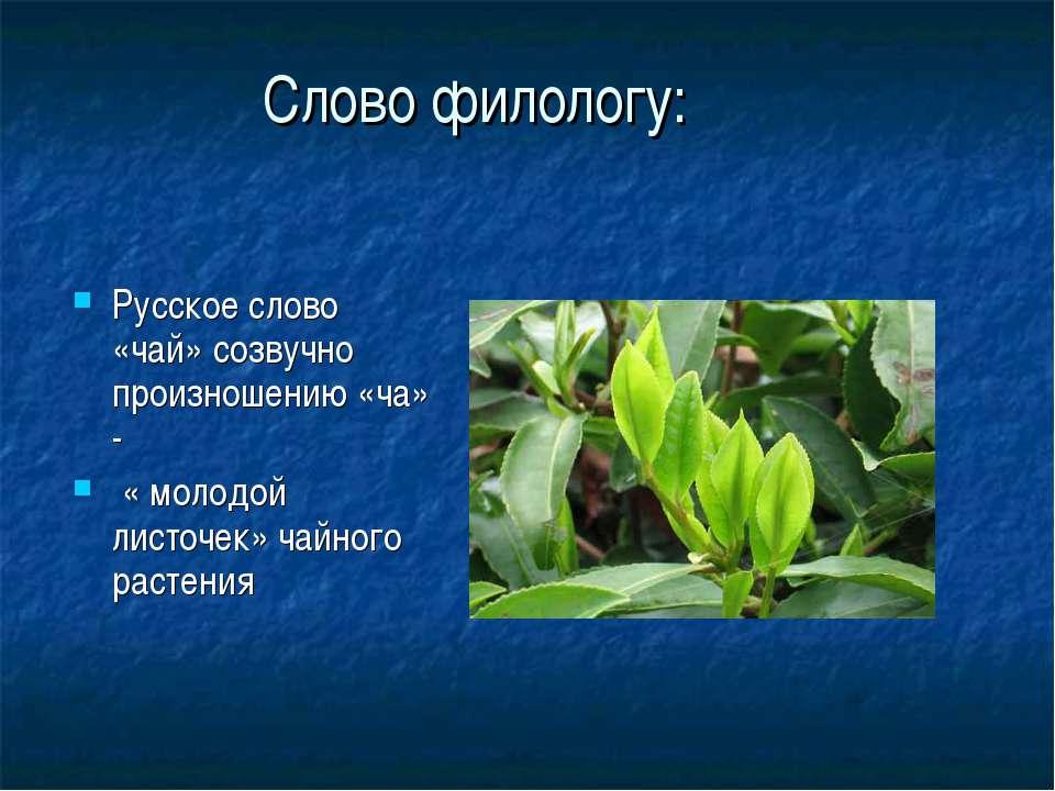 Слово филологу: Русское слово «чай» созвучно произношению «ча» - « молодой ли...