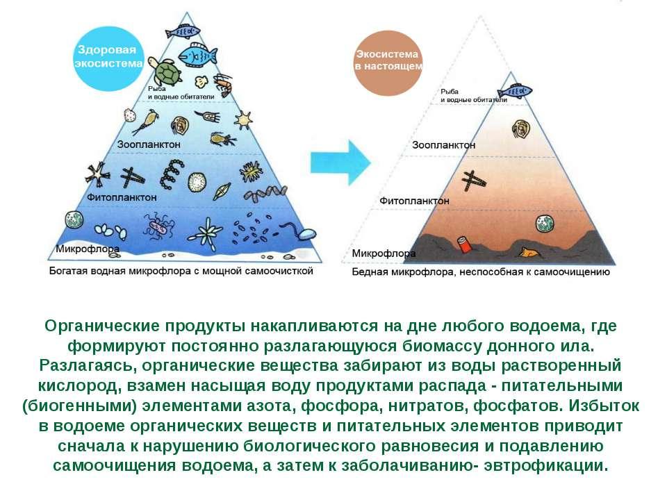 Органические продукты накапливаются на дне любого водоема, где формируют пост...