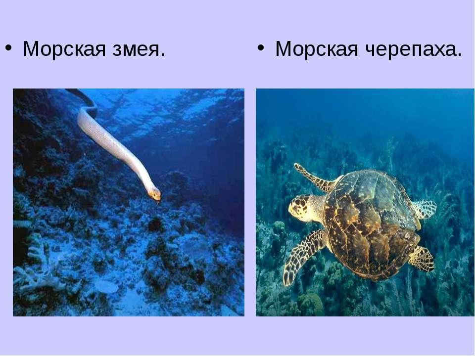 Морская черепаха. Морская змея.