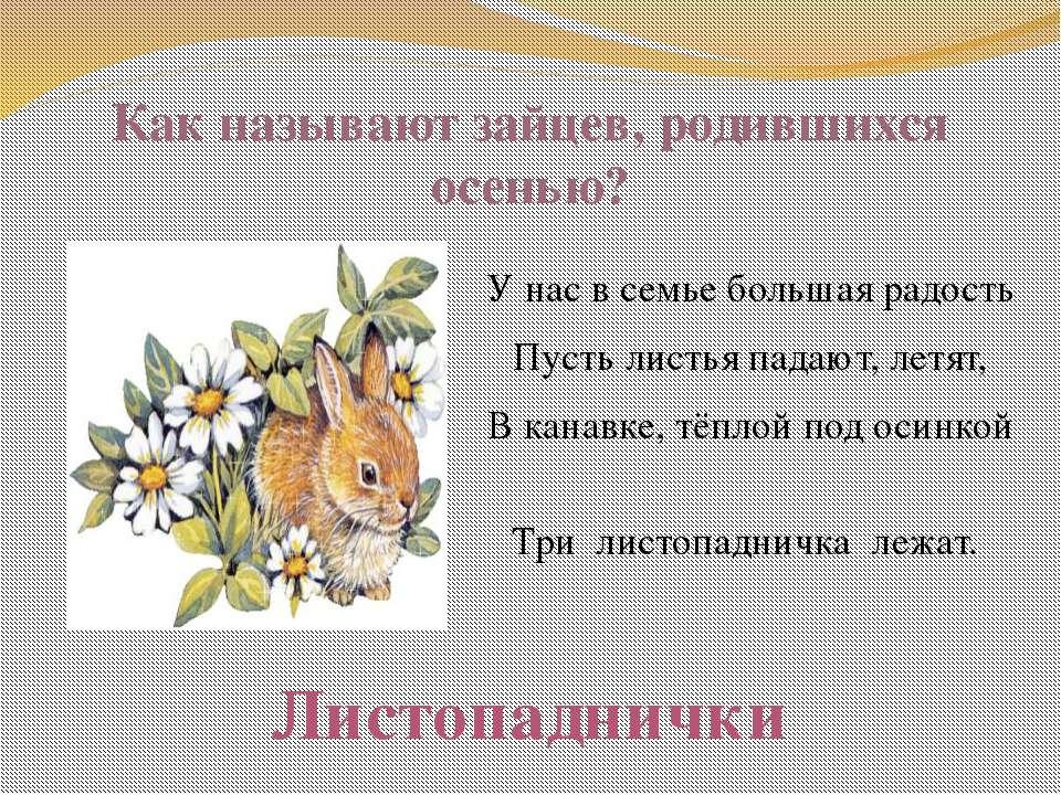 Как называют зайцев, родившихся осенью? У нас в семье большая радость Пусть л...
