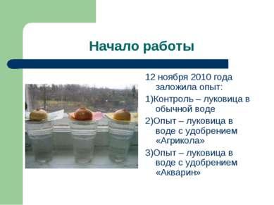 Начало работы 12 ноября 2010 года заложила опыт: 1)Контроль – луковица в обыч...