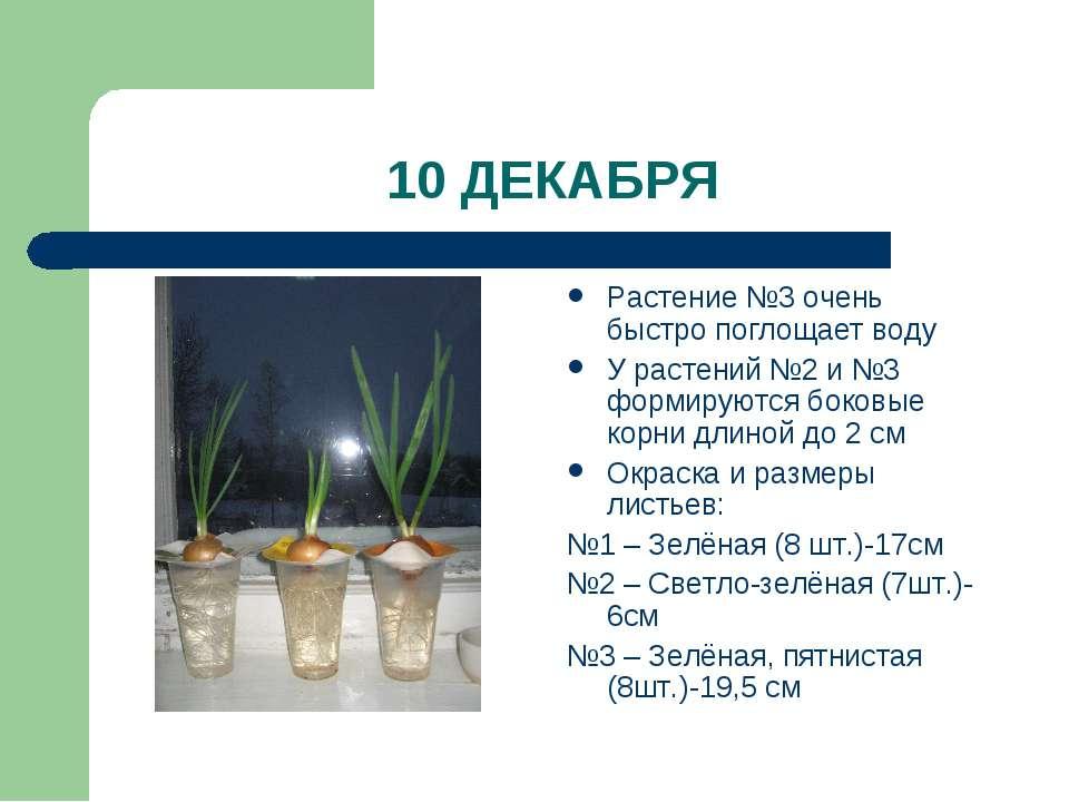 10 ДЕКАБРЯ Растение №3 очень быстро поглощает воду У растений №2 и №3 формиру...