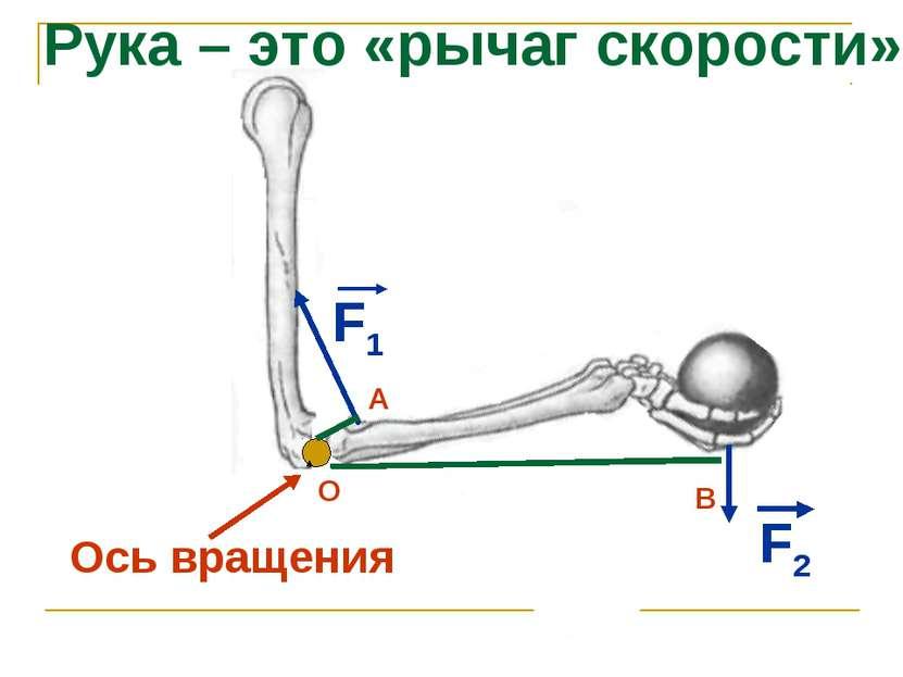 Ось вращения F1 F2 Рука – это «рычаг скорости» О В А