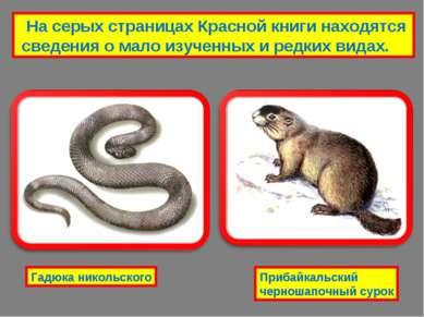 На серых страницах Красной книги находятся сведения о мало изученных и редких...