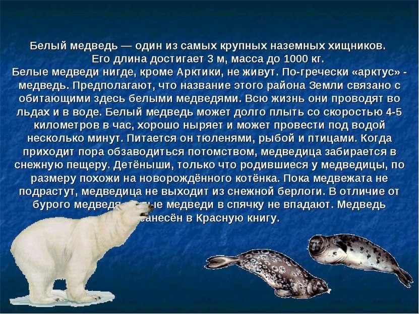 Белый медведь— один из самых крупных наземных хищников. Его длина достигает ...