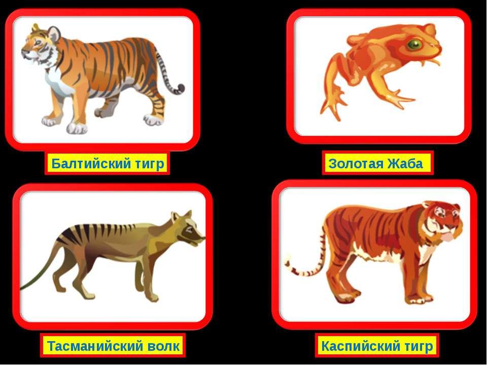 Балтийский тигр Тасманийский волк Золотая Жаба Каспийский тигр