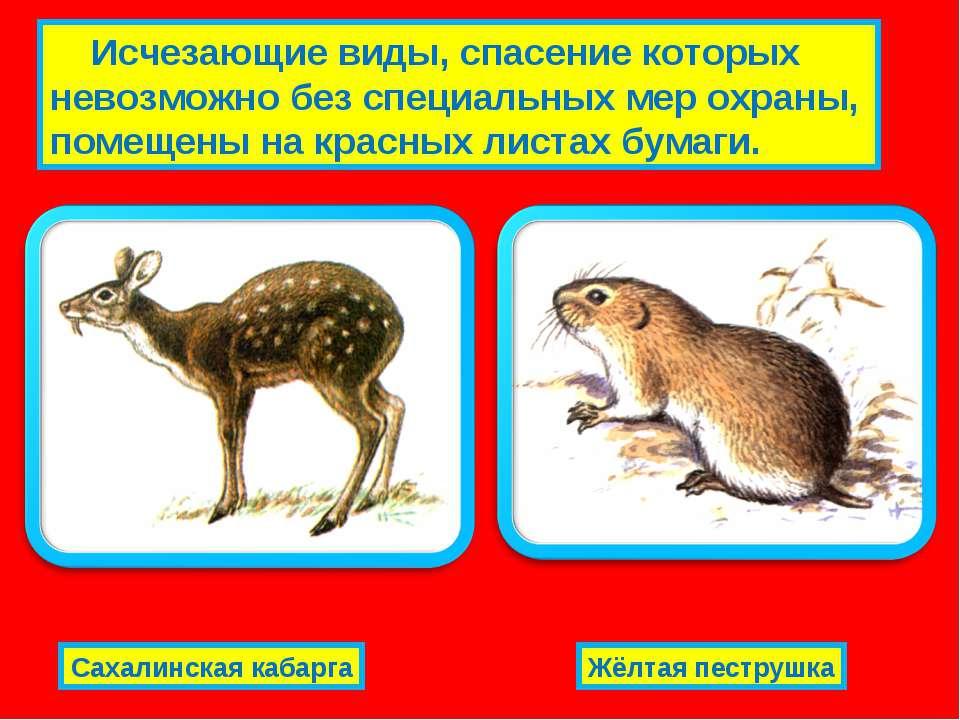 Исчезающие виды, спасение которых невозможно без специальных мер охраны, поме...