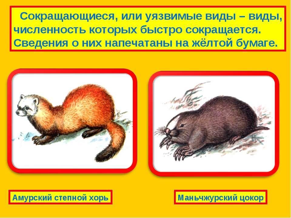 Сокращающиеся, или уязвимые виды – виды, численность которых быстро сокращает...