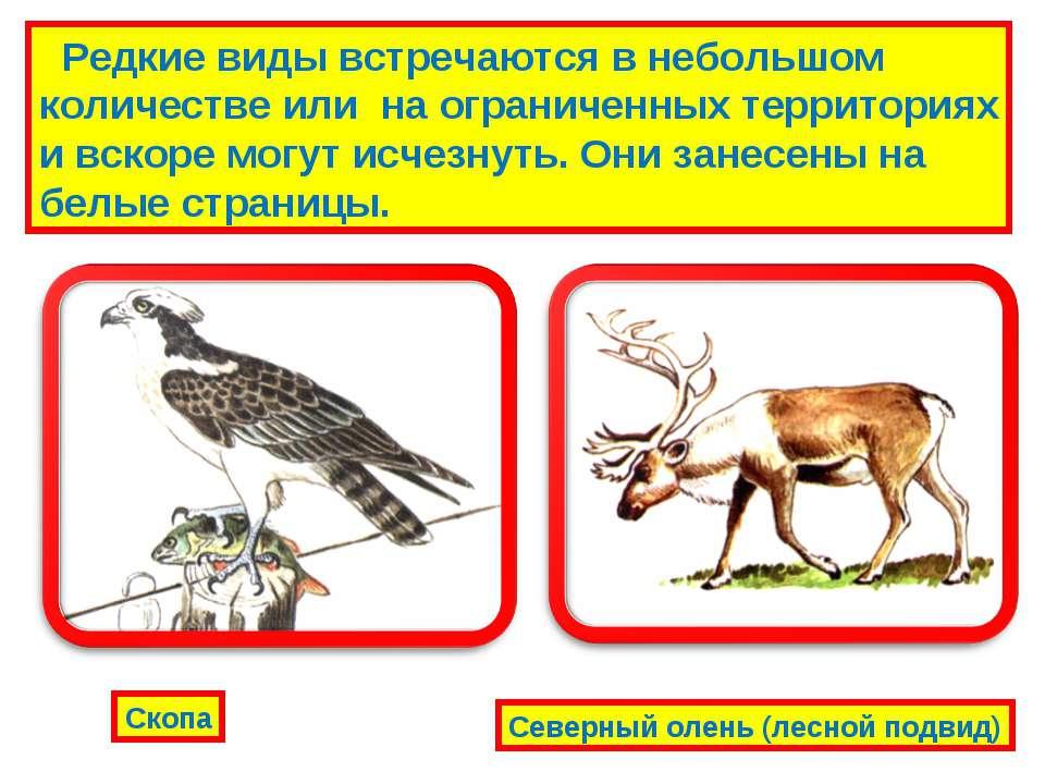 Редкие виды встречаются в небольшом количестве или на ограниченных территория...