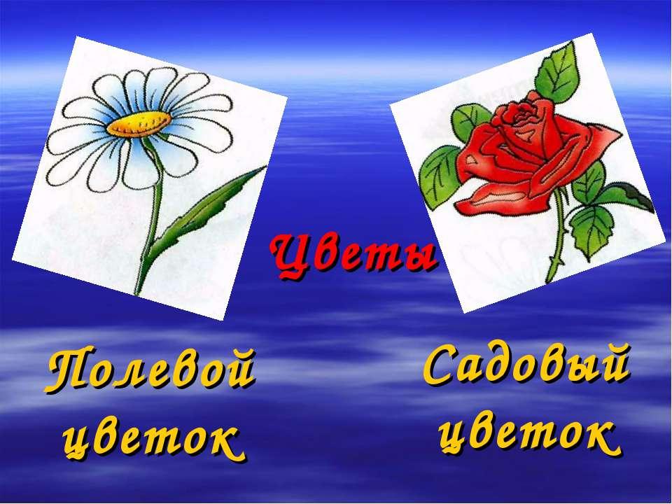 Цветы Полевой цветок Садовый цветок