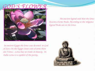 GOD'S FLOWER An ancient legend said that the lotus became a home Buda. Accord...