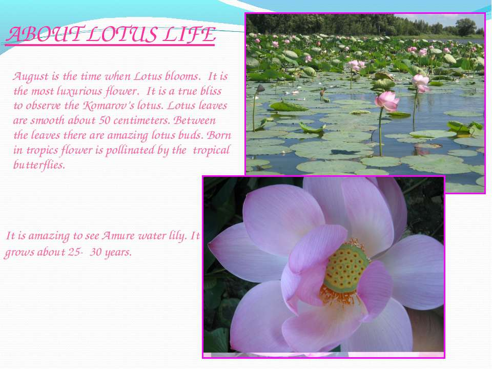 August is the time when Lotus blooms. It is the most luxurious flower. It is ...