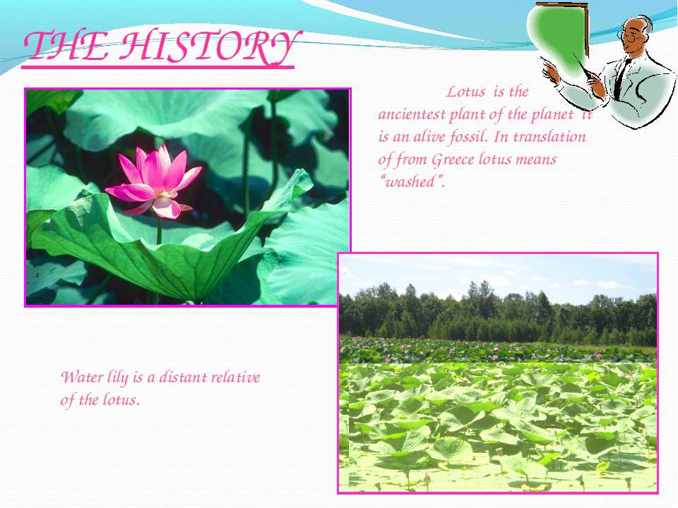 THE HISTORY Water lily is a distant relative of the lotus. Lotus is the ancie...