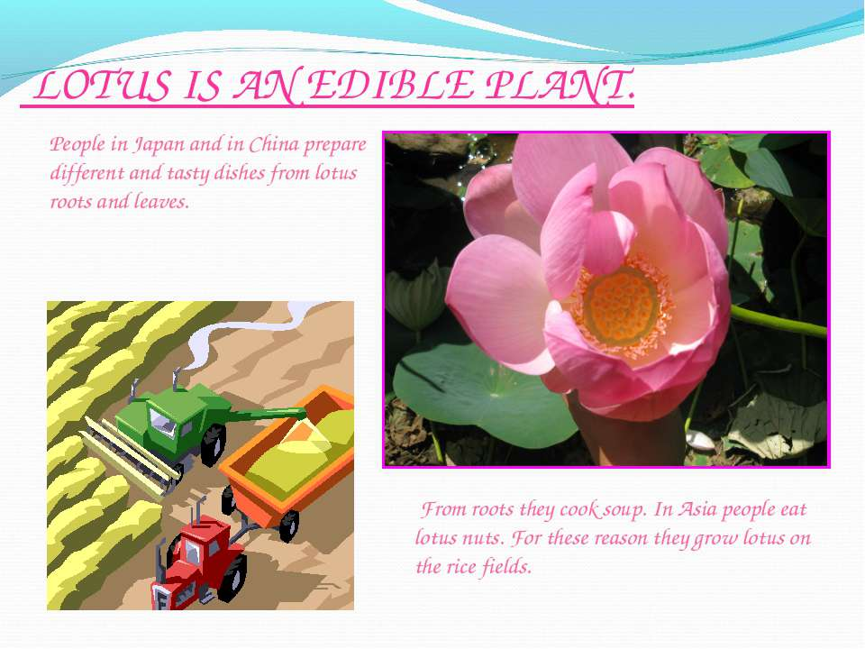 LOTUS IS AN EDIBLE PLANT. From roots they cook soup. In Asia people eat lotus...