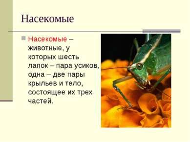 Насекомые Насекомые – животные, у которых шесть лапок – пара усиков, одна – д...