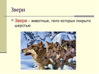 Звери Звери – животные, тело которых покрыто шерстью