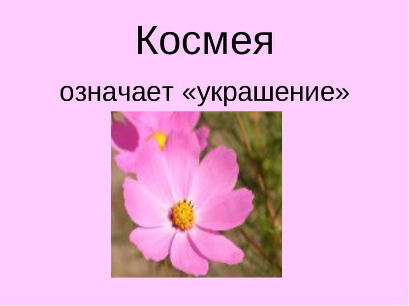 Космея означает «украшение»