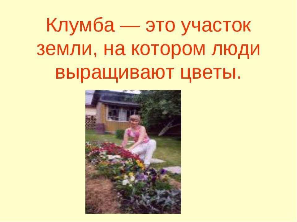 Клумба — это участок земли, на котором люди выращивают цветы.