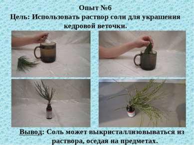 Опыт №6 Цель: Использовать раствор соли для украшения кедровой веточки. Вывод...