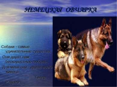 НЕМЕЦКАЯ ОВЧАРКА Собаки - самые удивительные существа; Они дарят нам бескорыс...