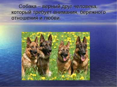 Собака – верный друг человека, который требует внимания, бережного отношения ...