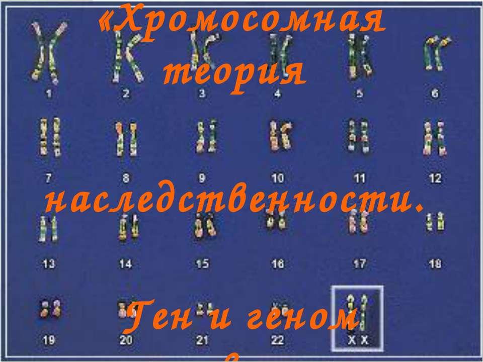 «Хромосомная теория наследственности. Ген и геном человека ».