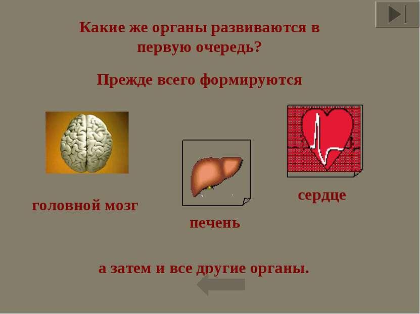 Какие же органы развиваются в первую очередь? Прежде всего формируются головн...