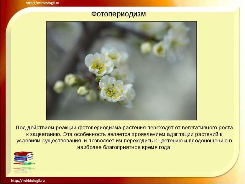 Фотопериодизм Под действием реакции фотопериодизма растения переходят от веге...