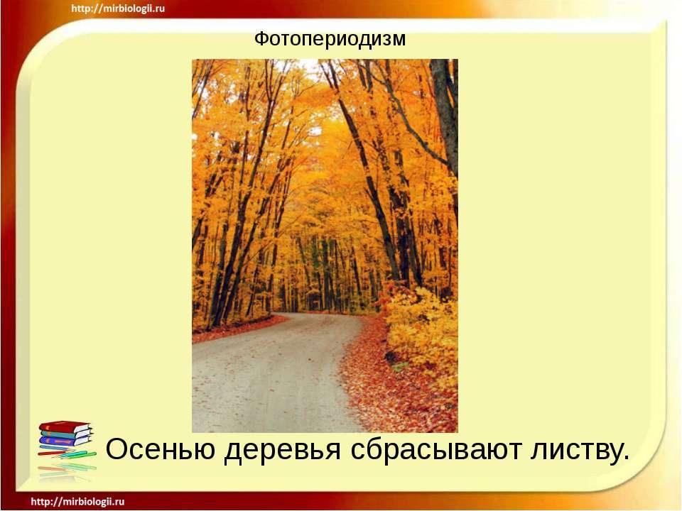 Фотопериодизм Осенью деревья сбрасывают листву.