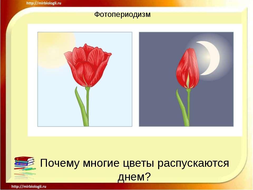 Фотопериодизм Почему многие цветы распускаются днем?