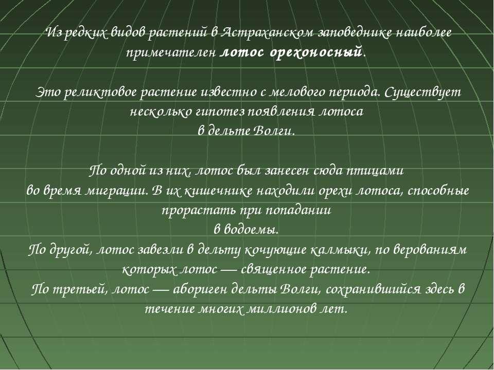 Из редких видов растений в Астраханском заповеднике наиболее примечателен лот...